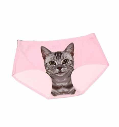 chats sur des vêtements ou accessoires