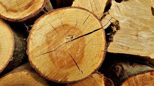 rondin bois
