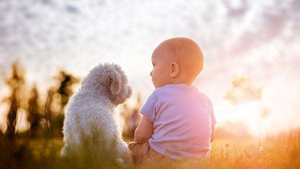 Bébé et le caniche